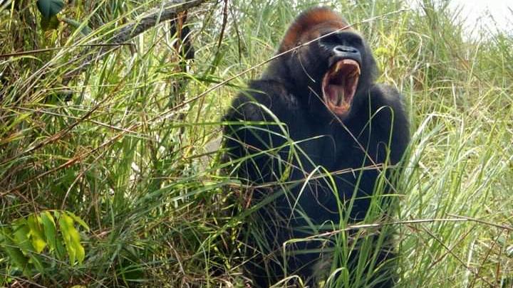 Voyage Congo-Brazzaville